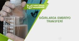 Sığırlarda Embriyo Transferi