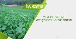 Yem Bitkileri Yetiştiriciliği ve Önemi