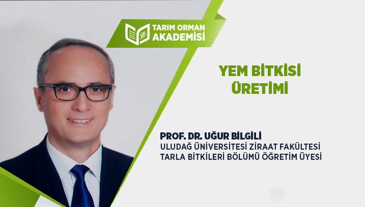 Türkiye'de Yem Bitkisi Üretimi