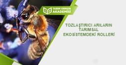 Tozlaştırıcı Arıların Tarımsal Ekosistemdeki Rolleri